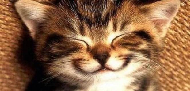 gattocheride